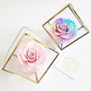 Preserved-Rose-in-Glass-Box
