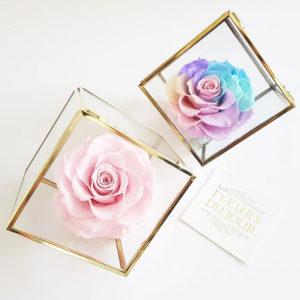 Preserved-Rose-in-Glass-Box